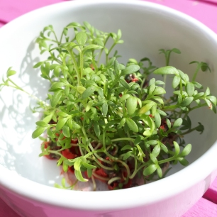 Cress growing from seed paper