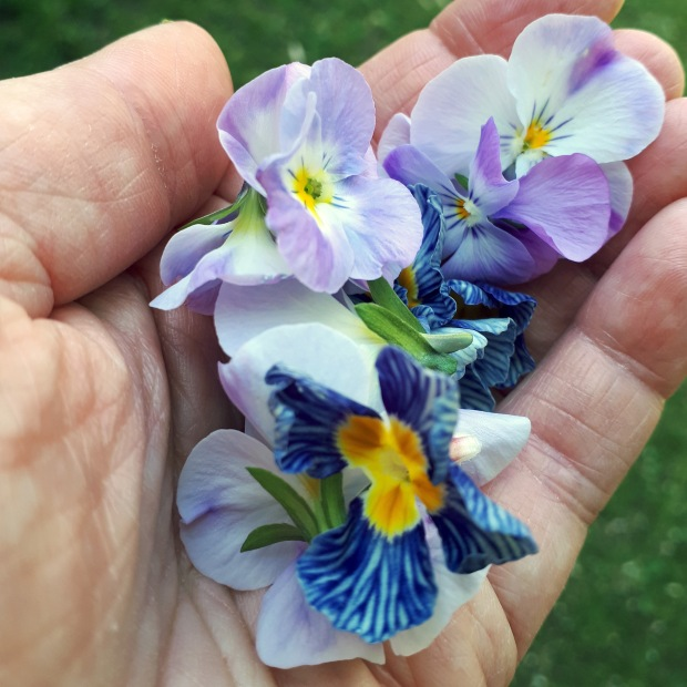 handful of violas