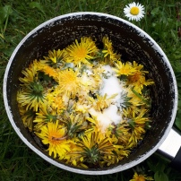 flowers in pan