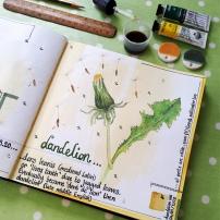 Illustration in my sketchbook of dandelion